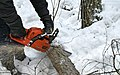 Cutting tree with chainsaw 20180202.jpg