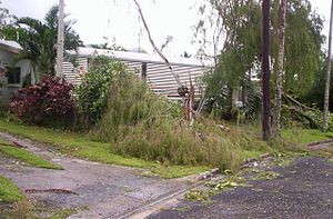 Cyclone Larry - Photo taken by a resident in Edmonton, an outer suburb of Cairns in the aftermath of the storm, on 20 March 2006.