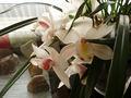 CymbidiumEnsifolium.jpg