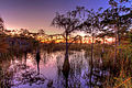 Cypress sunset, NPSphoto, G.Gardner (9255152185).jpg