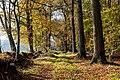 Dülmen, Börnste, Waldweg -- 2020 -- 3564.jpg