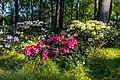 Dülmen, Welte, Rhododendronwald -- 2020 -- 6902.jpg