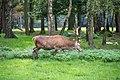 Dülmen, Wildpark -- 2011 -- 2181.jpg