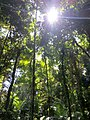 Daintree National Park, Queensland 04.jpg