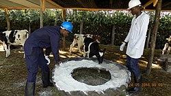 Dairy Managment 01.jpg
