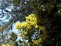 Day trip to the Botanical Gardens - panoramio (27).jpg