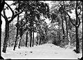 De Sparrenlaan in de winter - Regionaal Archief Alkmaar - FO1400058.jpg