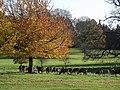 Deer, Wollaton Park - geograph.org.uk - 280861.jpg