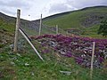 Deer Fence, Inchrory - geograph.org.uk - 905739.jpg