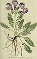 Deutschlands flora in abbildungen nach der natur (1806) (14760915334).jpg