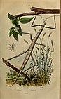 Dictionnaire pittoresque d'histoire naturelle et des phénomènes de la nature (1838) (14594513989).jpg