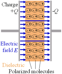 The electrons within dielectric molecules are influenced by the electric field, causing the molecules to rotate slightly from their equilibrium positions. The air gap is shown for clarity; in a real capacitor, the dielectric is in direct contact with the plates. Capacitors also allow AC current to flow and blocks DC current.