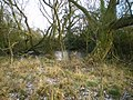 Disappearing pond at The Wyke - geograph.org.uk - 1624843.jpg