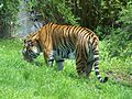 Disney's Animal Kingdom36.jpg
