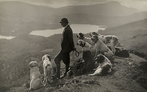 Dogs help a Scottish gamekeeper keep watch in Aberfoyle, Scotland