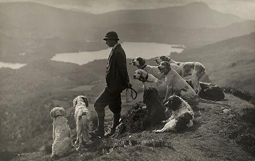 Dogs help a Scottish gamekeeper keep watch in Aberfoyle, Scotland