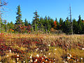 Dolly-sods-bog-fall - West Virginia - ForestWander.jpg