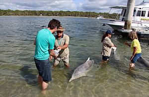 Tin Can Bay, Queensland - Dolphin Feeding at Tin Can Bay