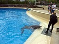 Dolphin Training (7980915237).jpg