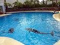 Dolphins (7980918955).jpg