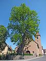 Dorflinde in Waizenbach, 1.jpg