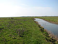 Drain west of Toft Monks drainage mill - geograph.org.uk - 1803533.jpg