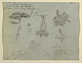 Drawing, Tree Studies seen from the Rio Magadalena, Colombia, 1853 (CH 18193411).jpg