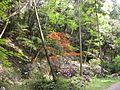 Dscn0261 japan nature.jpg
