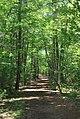 Duke Forest PineyMtnRd N cathedralView.jpg