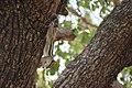 Eating Squirrel 2 (117203139).jpeg