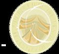Echinococcus granulosus egg (01).png