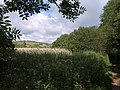 Edge of Slapton Ley - geograph.org.uk - 1362298.jpg