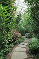 Edvard Andersons växthus-IMG 1619.jpg