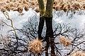 Eik (Quercus) spiegelt zich in waterplas. Locatie, natuurgebied Delleboersterheide – Catspoele.jpg