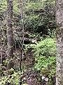 Elbow Cave in Columbia, Missouri (Spring 2020).jpg