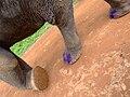 Elephant trekking - Koh Chang.jpg