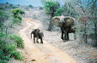 Tsavo East National Park - Elephants crossing road in Tsavo East