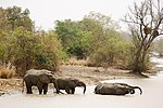 Elephants bath park w wide 2006.jpg