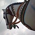 Ellai Muniyappan Temple, Madhaiyan St, Arisipalayam, Salem, TN, IND - panoramio (11).jpg