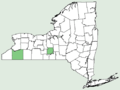 Elymus macgregorii NY-dist-map.png