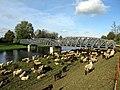 Elz mit Brücke der Kaiserstuhlbahn in Riegel.jpg
