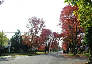 Empty street in autumn - Salem, Oregon.JPG