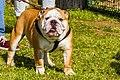 Encontro Dog Institute (41038144315).jpg