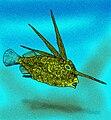 Eospinus daniltshenkoi.jpg