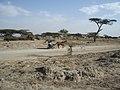 Ethiopia - Desert Donkey.jpg