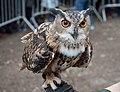 Eurasian eagle-owl (44034).jpg