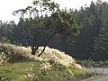 Evening sunlight catching the Coromandel road's flora - panoramio.jpg