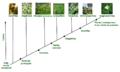 Evolución de las plantas.png