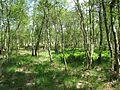FFH 2325-301, Ohmoor, 9, Garstedt, Landkreis Segeberg.jpg