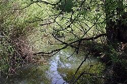 Fanno Creek in Greenway Park.jpg